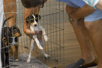 Dogs at new Beaufort County shelter experience a four-star stay until adopted