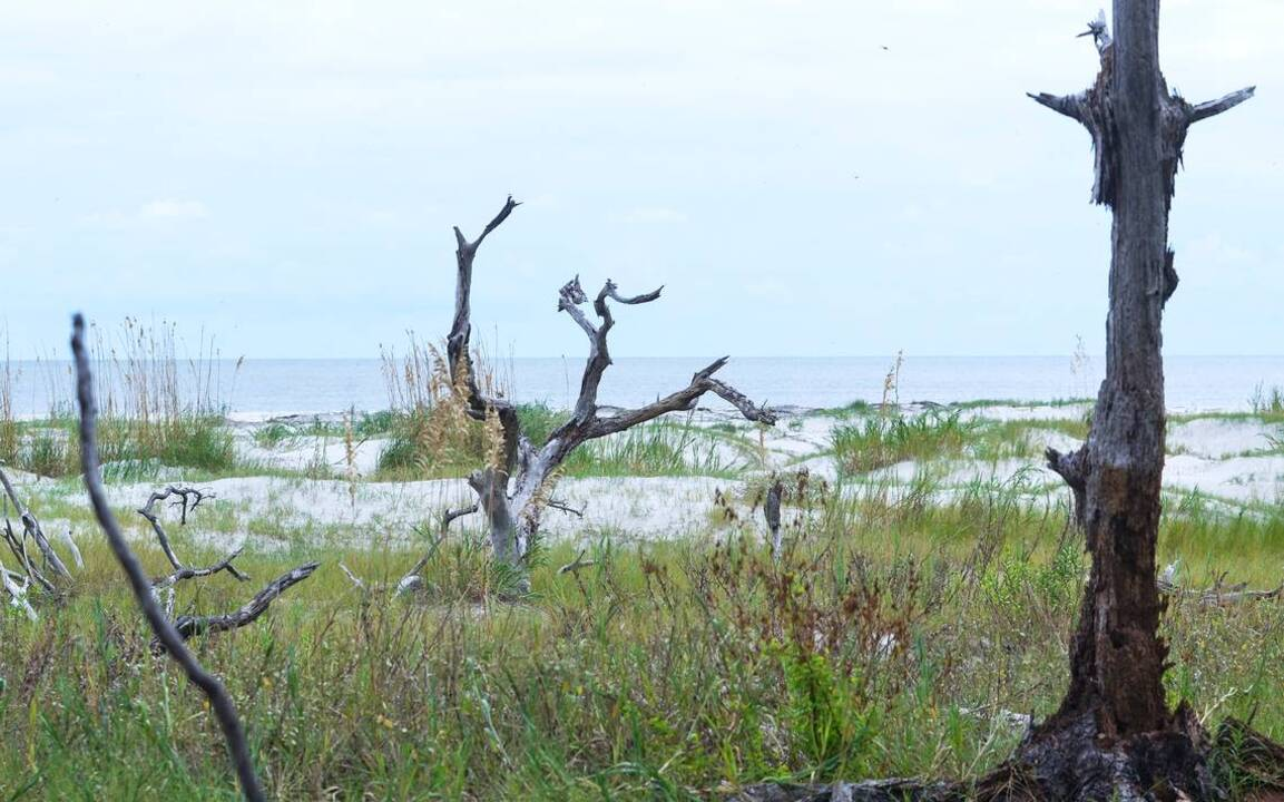 Here we go again: Developers eye possible resort at remote Beaufort Co. island