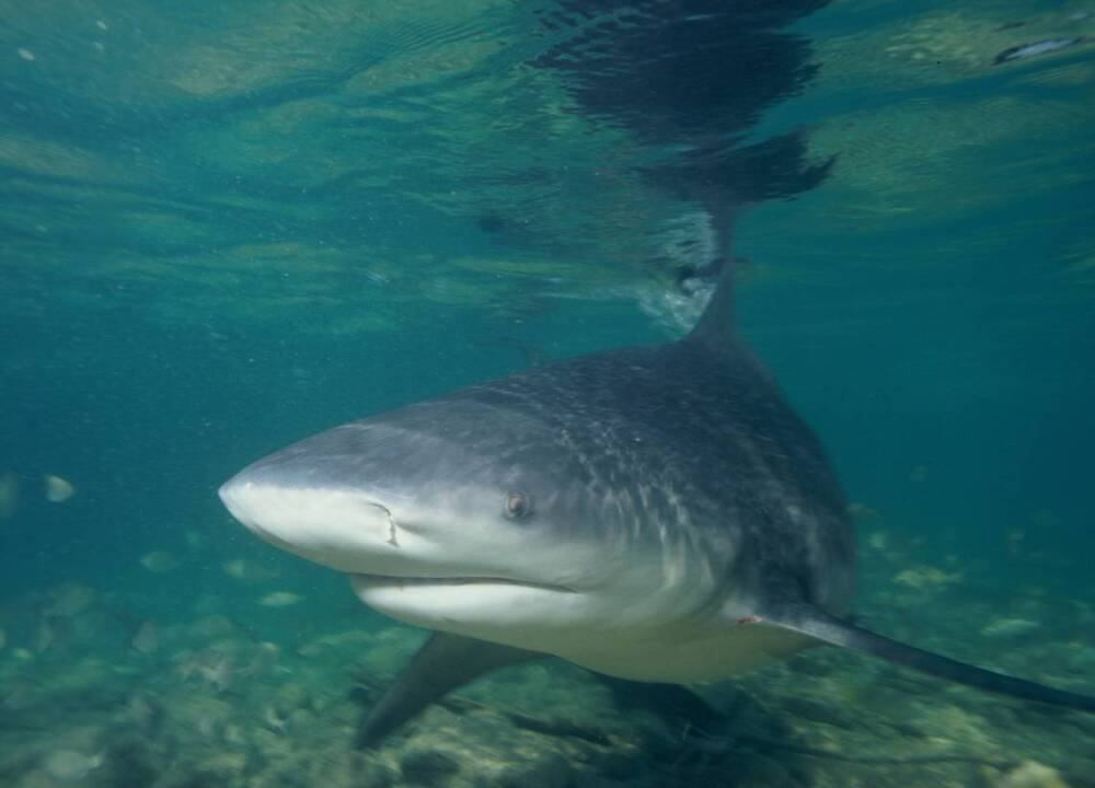 An 11-year-old tourist was playing on Fort Lauderdale beach. Then the shark arrived