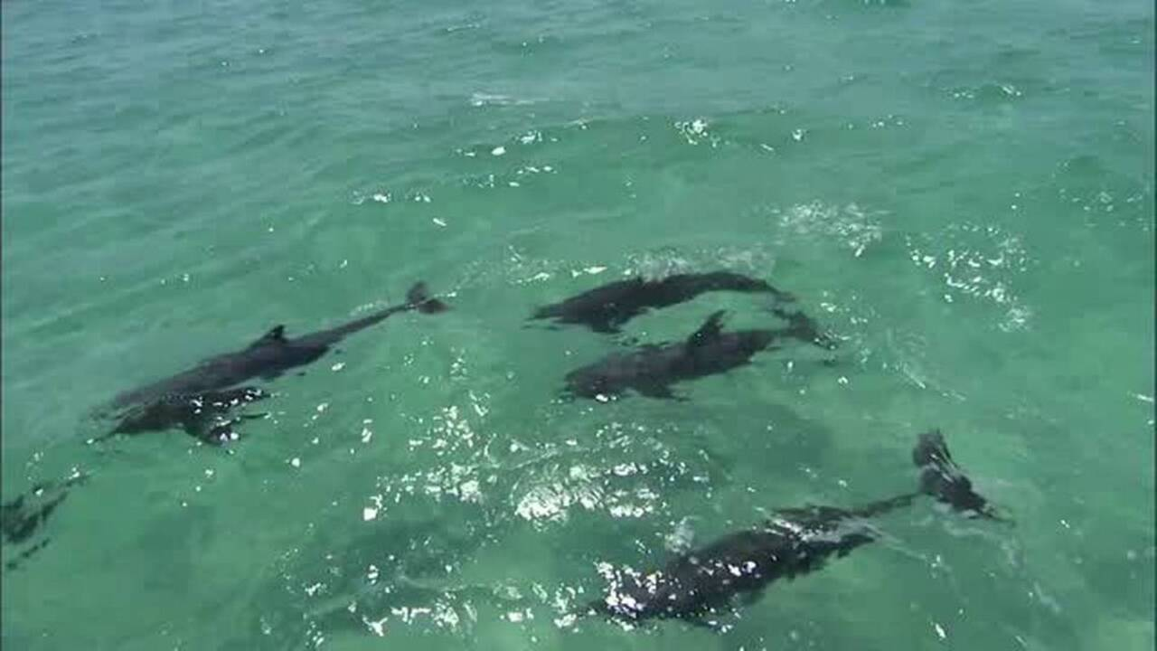 Top 4 Places to See Dolphins in Florida | VISIT FLORIDA