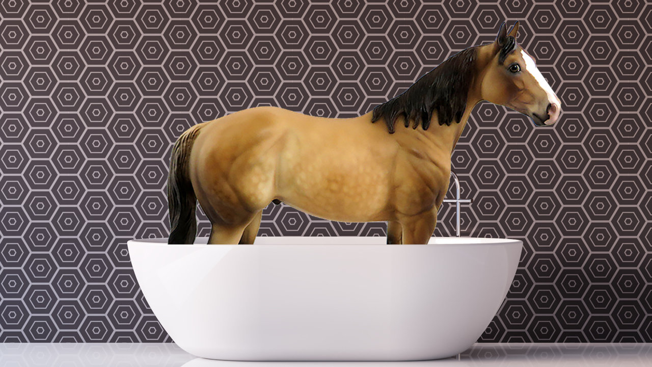 9 of the strangest SC laws still on the books — including one about horses in bathtubs