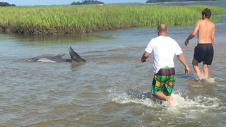 Watch as Beaufort County boaters free a stranded dolphin
