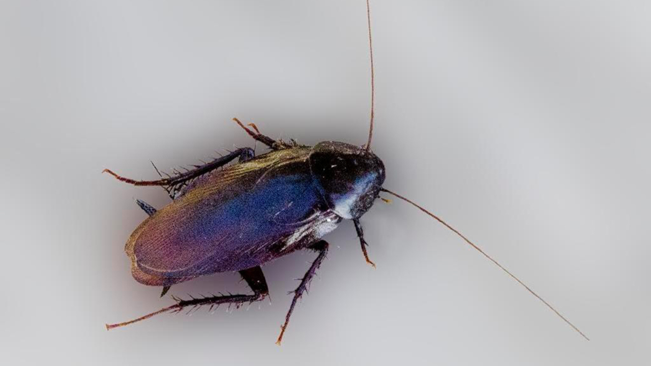 7 things you need to know about Palmetto bugs | Hilton Head