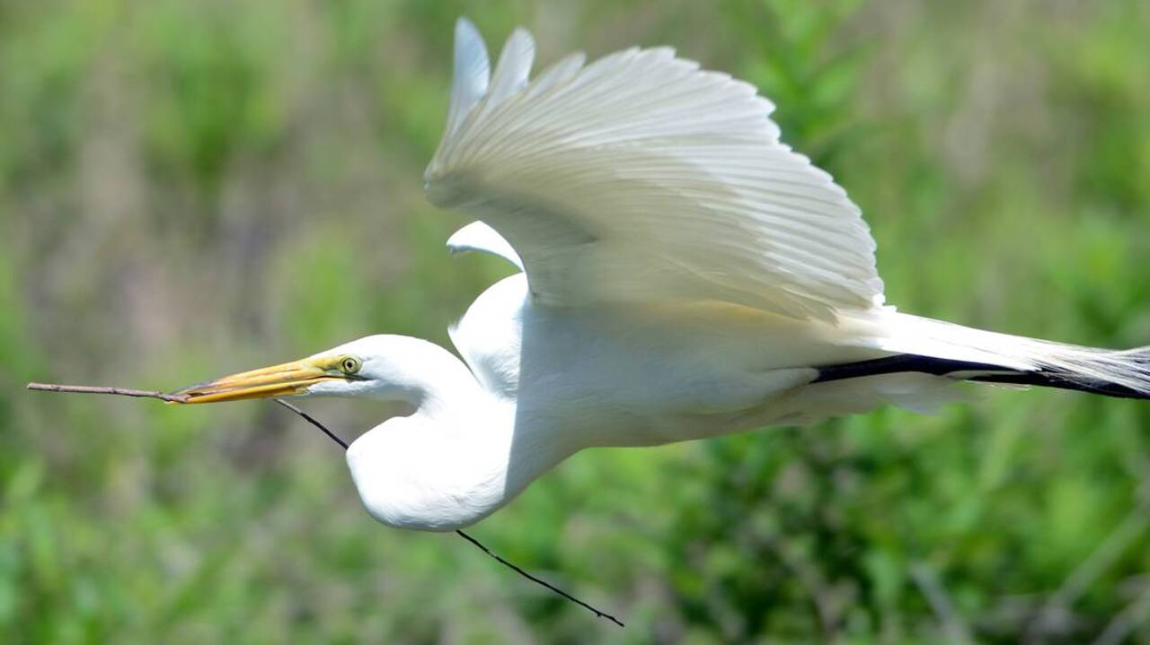 He was for the birds: Hilton Head's conscience for wildlife habitat Barry Lowes dies
