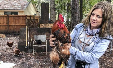 Beaufort Co. resident overrun with adopted chickens asks for help in relocating birds