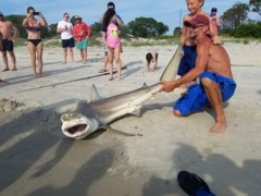 Men reel in blacktip shark on Tybee Island beach, pose for pictures before releasing