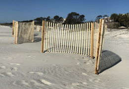 Hilton Head's dune fences are 'turtle-friendly', here's how