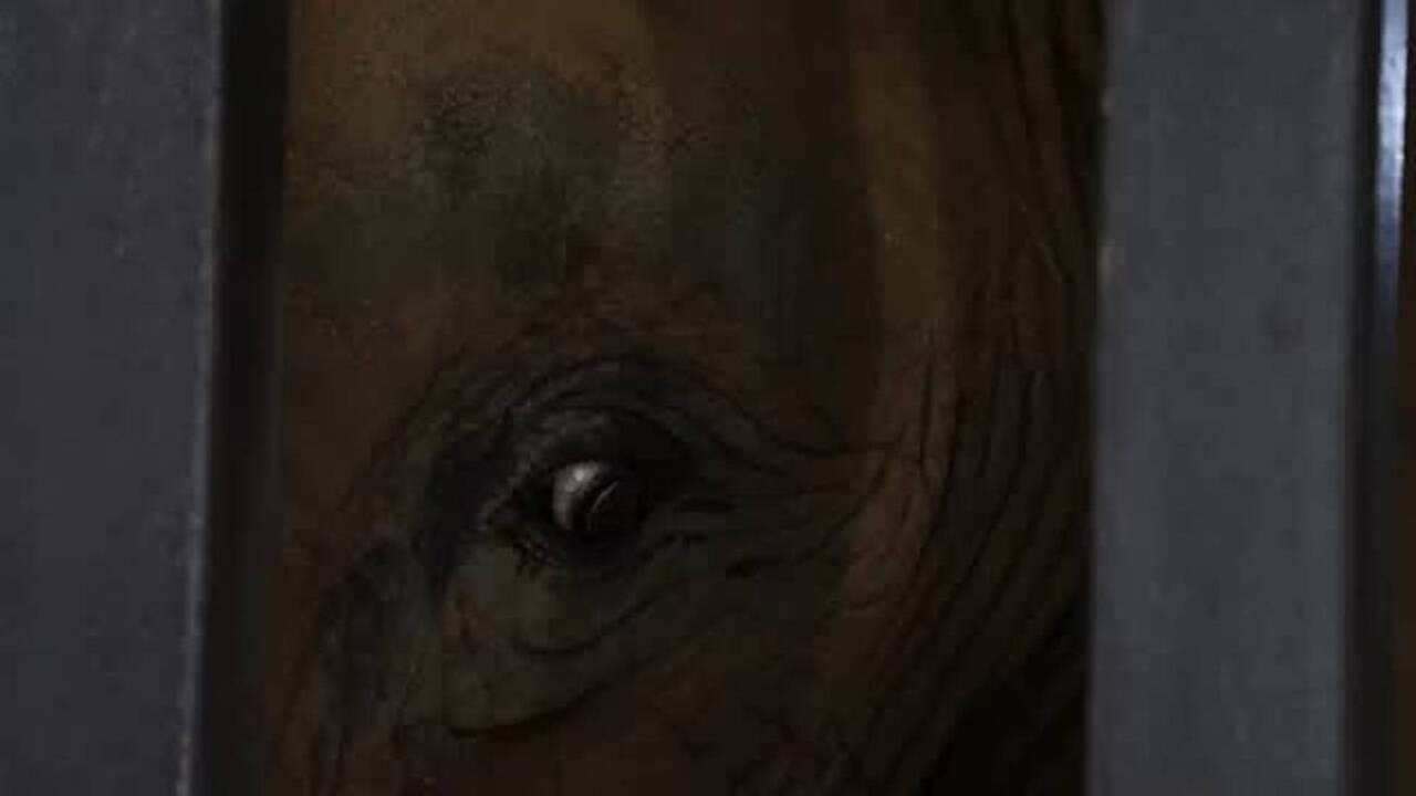 An elephant at Riverbanks Zoo has died