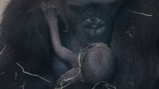 Riverbanks Zoo has a well-planned baby boom