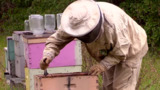 Cheerios giving away millions of wildflower seeds to help bees