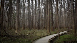 360 Video: Take in the sights and sounds of Congaree National Park