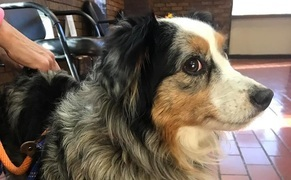 Service dog goes to VA hospital to be reunited with owner