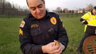 Police, fire crews rescue ducklings in Shiloh