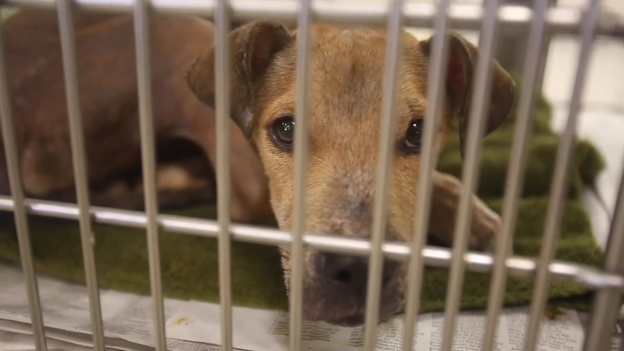 Animal shelters on Mississippi Coast looking for volunteers