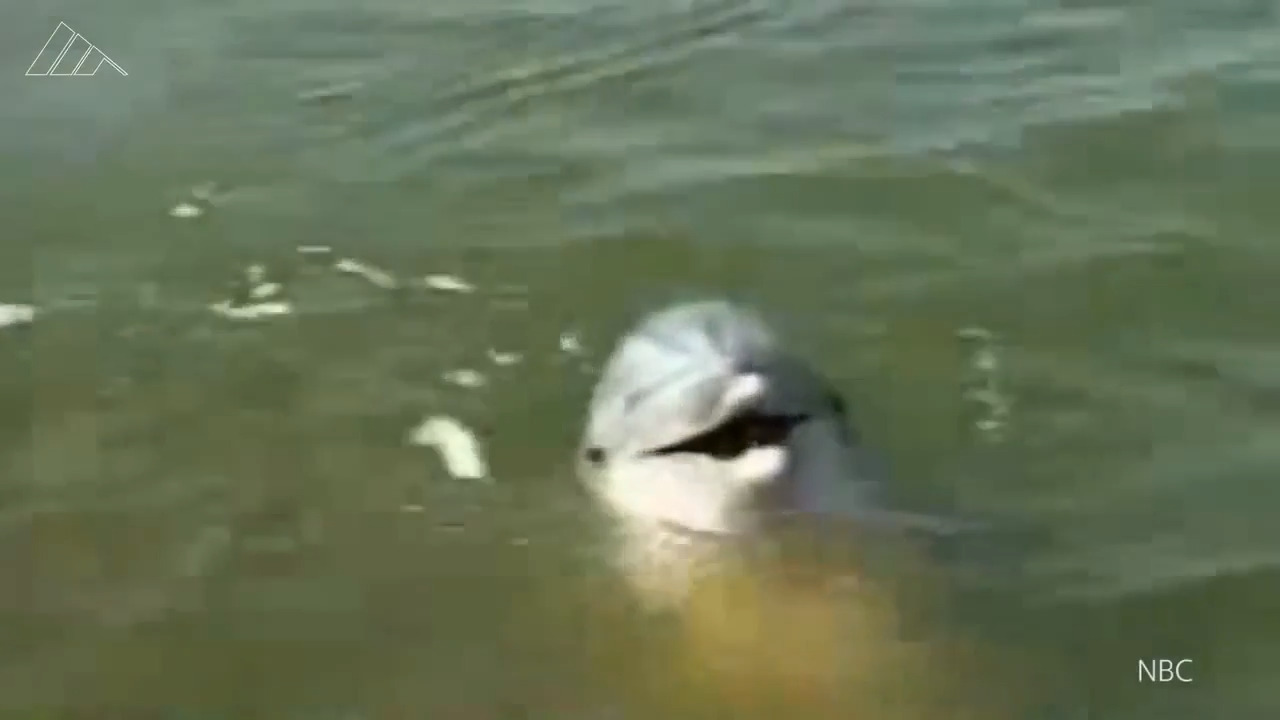'Katrina dolphins' now living at Bahamas resort safe in Hurricane Dorian, official says