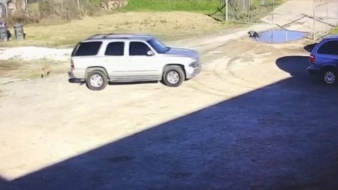 Dog follows car after driver tries to dump it at animal shelter