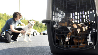It's not just people evacuating for the hurricane. Homeless animals are on the move, too