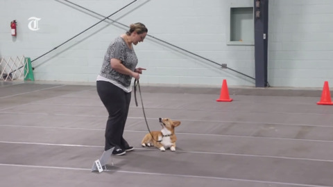 Dog show participant gives obedience tips