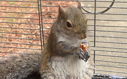 """Suspect denies he has """"attack squirrel"""" or fed it meth"""