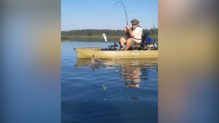 Kayaker reels in a shark in Murrells Inlet