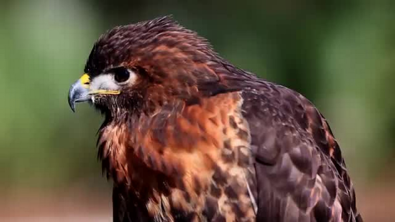 How to help rescue wounded birds of prey and shorebirds in SC Lowcountry