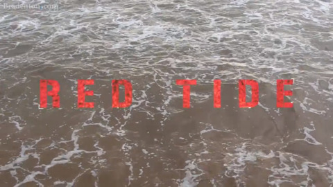 No one knows red tide's long-term health effects. U.S. House just OK'd $6.25 million for a study
