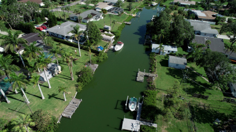 Blue-green algae levels are back to 'normal' in the Manatee River, DEP says