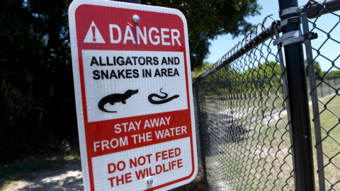 New alligator warning signs near dog park
