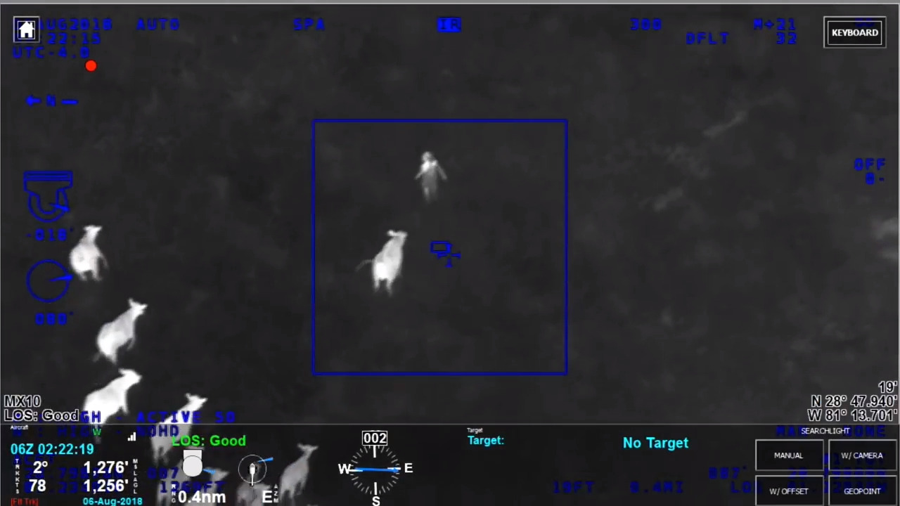 cows help florida police officers catch car theft suspect the news