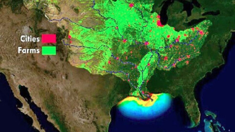 Near record 'dead zone' predicted for Gulf of Mexico. What's that mean for red tide?