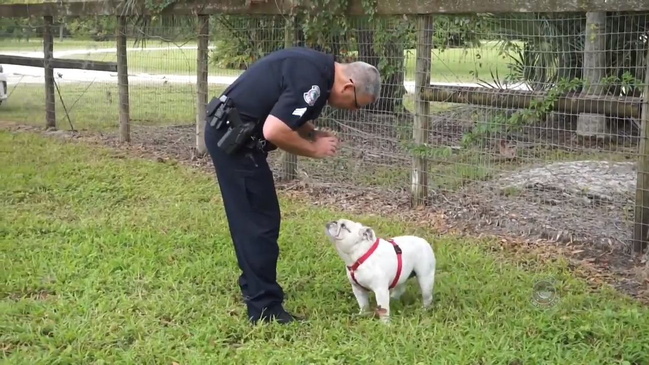Dog rescued in Sarasota, Florida. Four years ago, she was stolen in California, cops say
