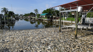 At Coral Shores, red tide 'hits you like a wall'