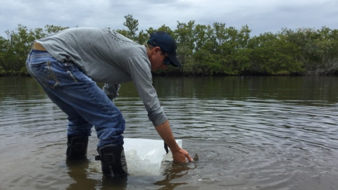 Red tide killed tons of fish. Part of the comeback starts at Robinson Preserve