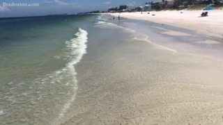 Red tide on Anna Maria Island beaches show signs of remission as fish are cleaned up, winds shift