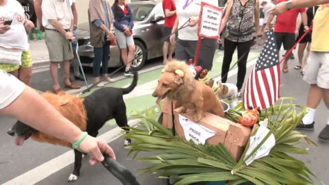 Dachshunds rule this Key West parade