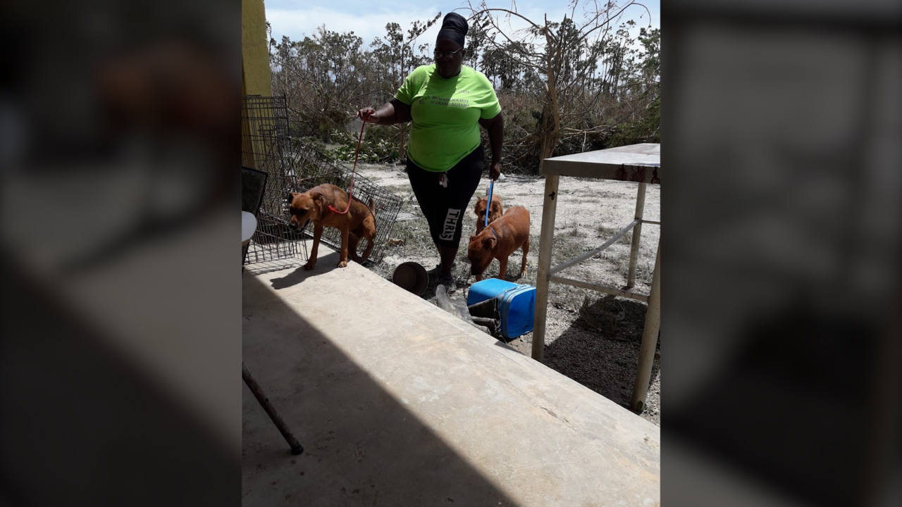Rescued animals from the Bahamas coming to Bradenton