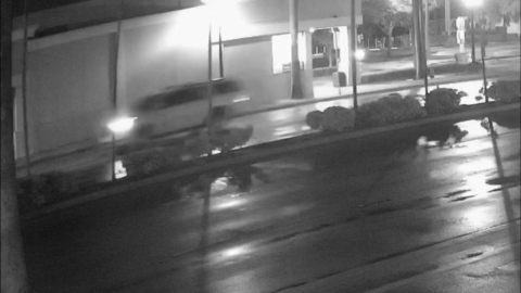 Hollywood police looking for driver involved in fatal hit-and-run crash
