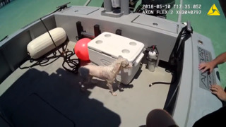 Wet dog reunited with owners by Florida marine rescue unit