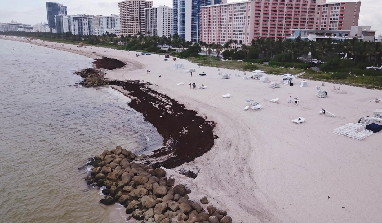 Poop, sargassum, flesh-eating bacteria in ocean waters. What a stinky summer, Florida! | Opinion