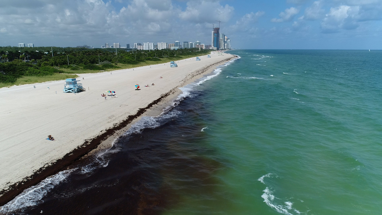 Florida Beaches Post Health Warnings
