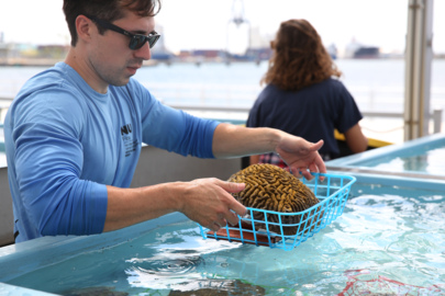 A 'Noah's Ark' project for corals: Scientists race to save Florida Reef from killer disease