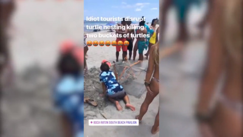 'Do Not Touch,' the sign said. That didn't stop tourists from digging up sea turtle nest