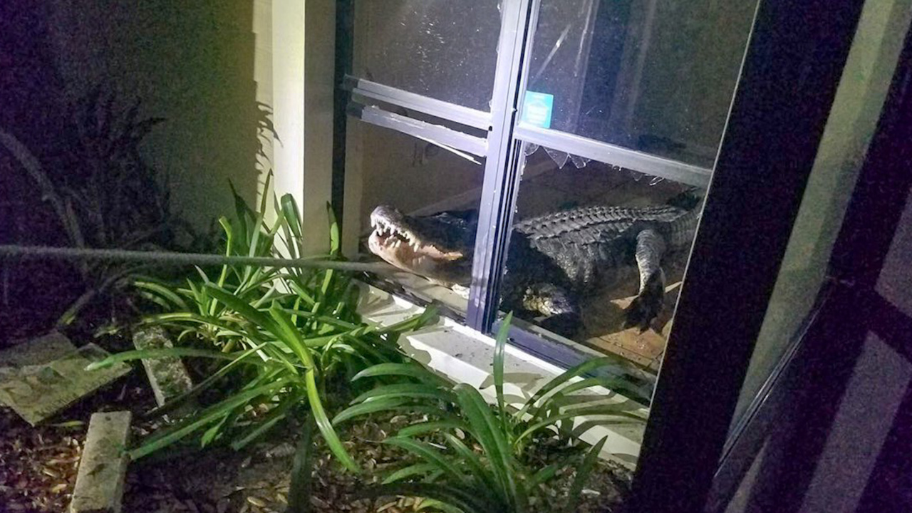 Her insurance didn't pay when an alligator smashed into her home. But there is help