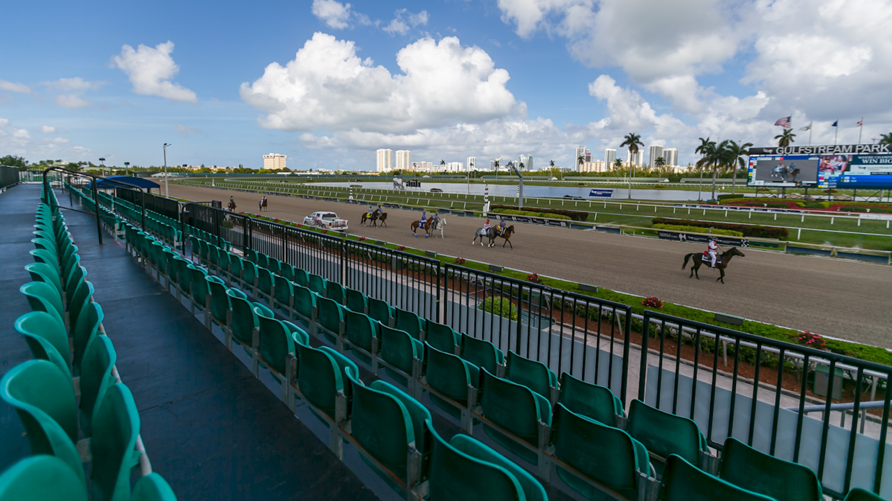 How a longtime Herald sports writer came to own a top contender in Saturday's no-fans Florida Derby