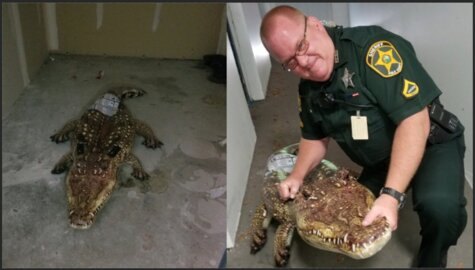 Woman calls 911 on alligator, it turned out to be a pool floatie