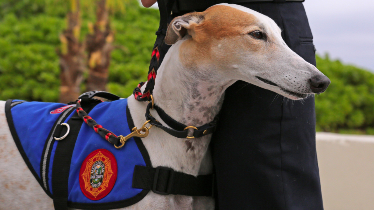 Firefighters suffer from higher rates of PTSD. Can greyhounds help?