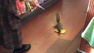 Shoplifting squirrel steals peanut M&Ms from a Disney store at Magic Kingdom