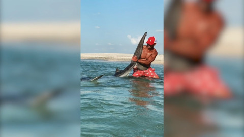 'Wow. That thing is gigantic!' Florida fisherman catches a giant tiger shark