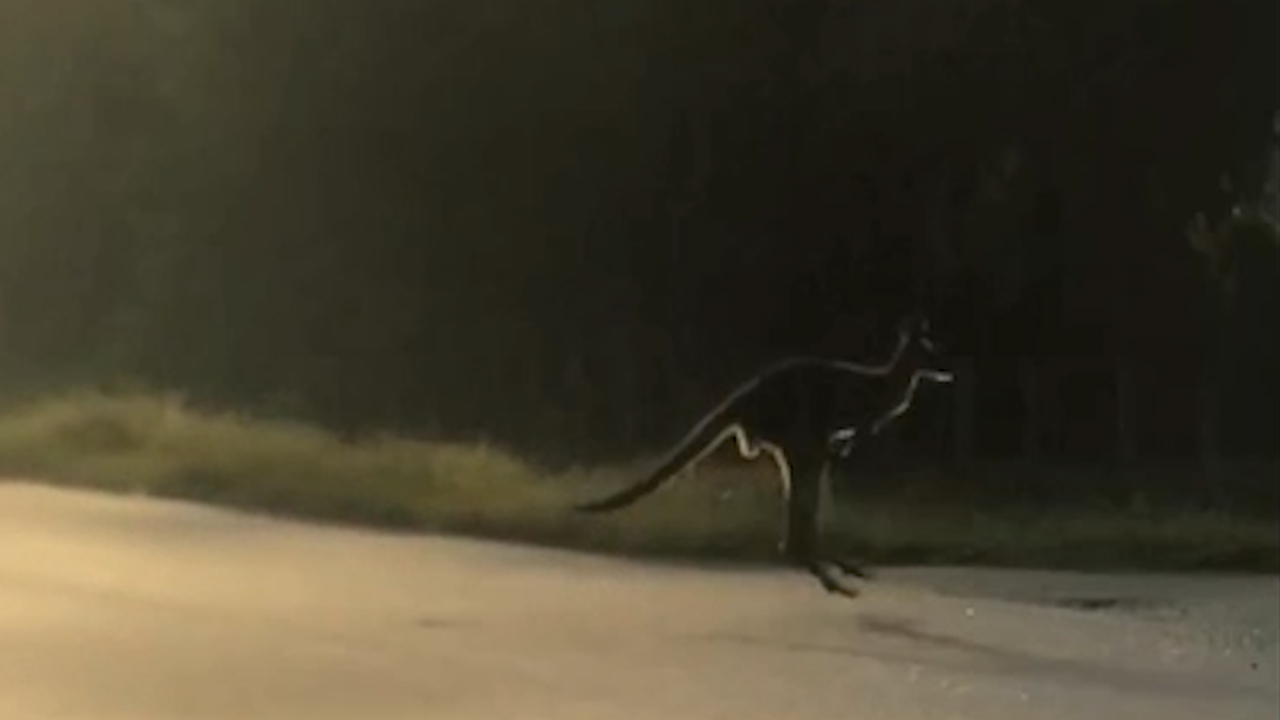 'How is this even possible?'A kangaroo was just spotted jumping around the Redland