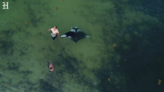 Watch this manta ray avoid North Miami Beach swimmers